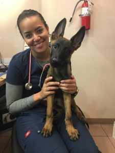 Karem is a very very smart boy! He knows up, sit, down, stay and paw. We are working on bite, work and heal. He loves going to work at the vets office and the officers love seeing a baby Mal when they come by! :) As texted by his owner Hillary from Miami